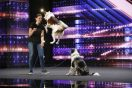 The Cutest Dog Auditions in 'America's Got Talent' History